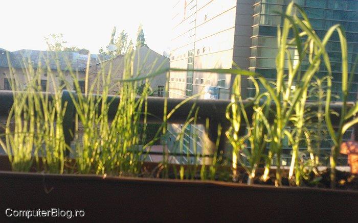 Lumia 800 - camera foto